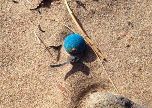 blue ball 1